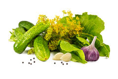 Salting cucumbers Royalty Free Stock Photography