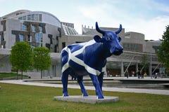 Saltire ko - skotska parlamentet Royaltyfria Bilder