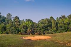 Saltlick in het bos is de plaatsen waar de olifanten mineralen in het Nationale Park van Khao Yai zullen eten royalty-vrije stock afbeeldingen