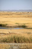Saltmarsh in west China. Saltmarsh in Dunhuang of west China Royalty Free Stock Photos
