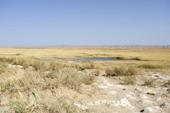 Saltmarsh in west China. Dunhuang Stock Image