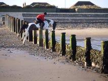 Salto agradável pelo cavalo da escola de equitação Imagem de Stock