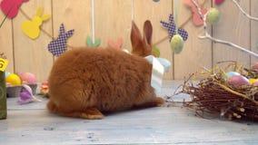 Salto conceptwearing del arco del conejo de pascua del símbolo tradicional mullido de la celebración almacen de metraje de vídeo