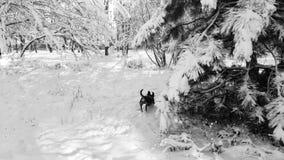 Salto de corrida do cão do bassê no inverno em um parque na neve Imagens de Stock Royalty Free