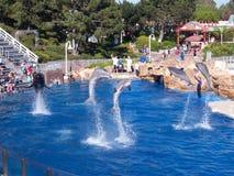 Salto de delfínes Fotografía de archivo libre de regalías