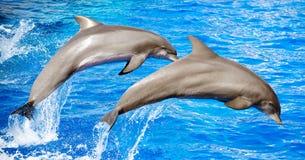 Salto de dois golfinhos Fotografia de Stock