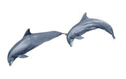 Salto de dos delfínes Imagenes de archivo