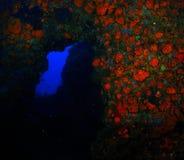 Salto de la cueva Fotografía de archivo