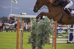 Salto de la demostración del caballo Imagen de archivo