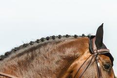 Salto de la demostración del caballo de Equestrain Fotos de archivo libres de regalías