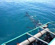 Salto de la jaula del tiburón Imágenes de archivo libres de regalías