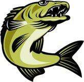 Salto de los pescados de los leucomas ilustración del vector