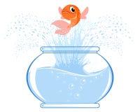 Salto de los pescados del oro Foto de archivo libre de regalías
