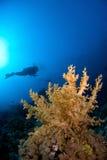 Salto de Scubadiver con el coral Fotografía de archivo libre de regalías