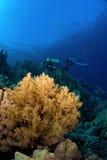 Salto de Scubadiver con el coral Imagen de archivo libre de regalías