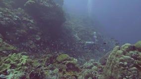 Salto del buceador en el mar azul entre pescados y el arrecife de coral Naturaleza subacuática almacen de video