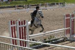 Salto del caballo blanco Foto de archivo
