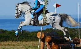Salto del caballo del campo a través Foto de archivo libre de regalías
