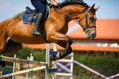 Salto del cavaliere del cavallo Fotografia Stock