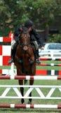 Salto del claro del caballo Imagen de archivo libre de regalías