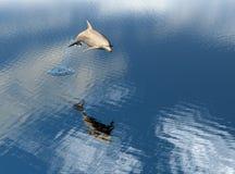 Salto del delfín Fotos de archivo libres de regalías