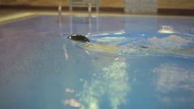 Salto del hombre joven en piscina metrajes