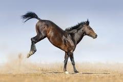 Salto del juego del caballo imágenes de archivo libres de regalías