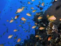 Salto del Mar Rojo Foto de archivo
