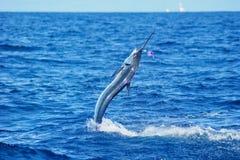 Salto del marlin bianco immagini stock libere da diritti