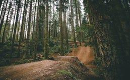 Salto del mountain bike nel legno immagine stock libera da diritti