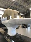 Salto del oso polar foto de archivo libre de regalías