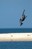 Salto del pelícano en el agua Fotografía de archivo libre de regalías