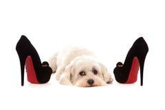 Salto do cão pequeno e da mulher Imagem de Stock