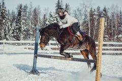 Salto do passeio do cavalo do salto do inverno Fotos de Stock Royalty Free