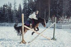 Salto do passeio do cavalo do salto do inverno Imagens de Stock Royalty Free