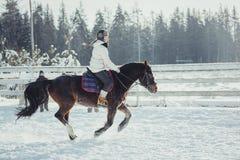 Salto do passeio do cavalo do salto do inverno Fotografia de Stock Royalty Free
