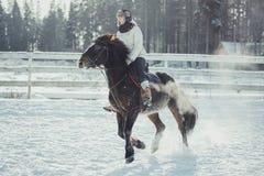 Salto do passeio do cavalo do salto do inverno Imagens de Stock