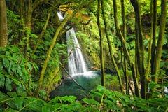 Free Salto Do Prego Waterfall, Azores, Portugal Stock Photos - 117795433