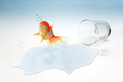 Salto dorato di libertà del pesce dal di vetro (concetto surreale) immagine stock