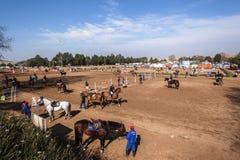 Salto ecuestre de la demostración del caballo Foto de archivo libre de regalías