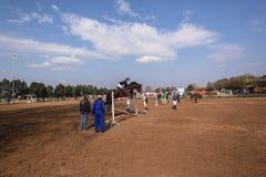 Salto ecuestre de la demostración del caballo Imagen de archivo libre de regalías