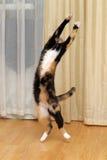 Salto engraçado do gato imagem de stock