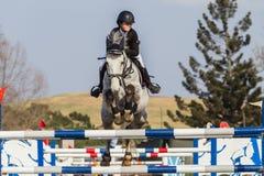 Salto equestre da menina do cavalo Fotografia de Stock Royalty Free