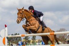 Salto equestre della ragazza del cavallo Fotografia Stock