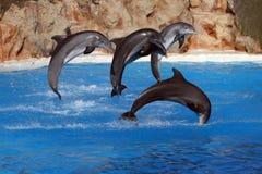 Salto feliz dos golfinhos Fotos de Stock Royalty Free