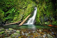 Salto font la cascade de Cagarrao, sao Miguel Island, Açores, Portugal Image stock