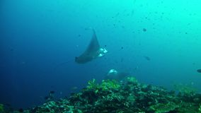 Salto Maldivas - Manta Ray almacen de video