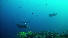 Salto Maldivas - Manta Ray metrajes