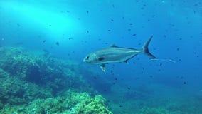 Salto Maldivas - pescados del medregal metrajes