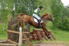 Salto rojo del caballo de la castaña Fotografía de archivo